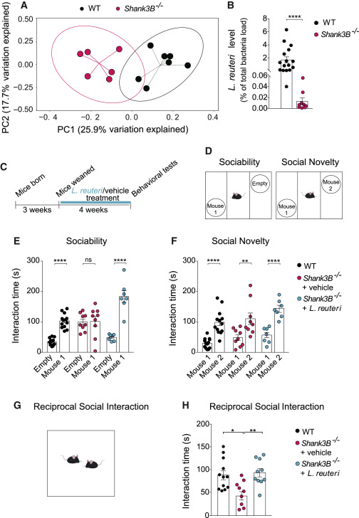 Autism Therapy Social Behavior Restored >> Mechanisms Underlying Microbial Mediated Changes In Social
