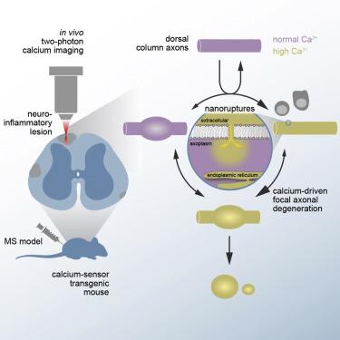 Calcium Influx through Plasma-Membrane Nanoruptures Drives