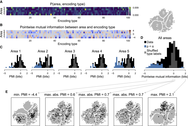 The Spatial Structure of Neural Encoding in Mouse Posterior
