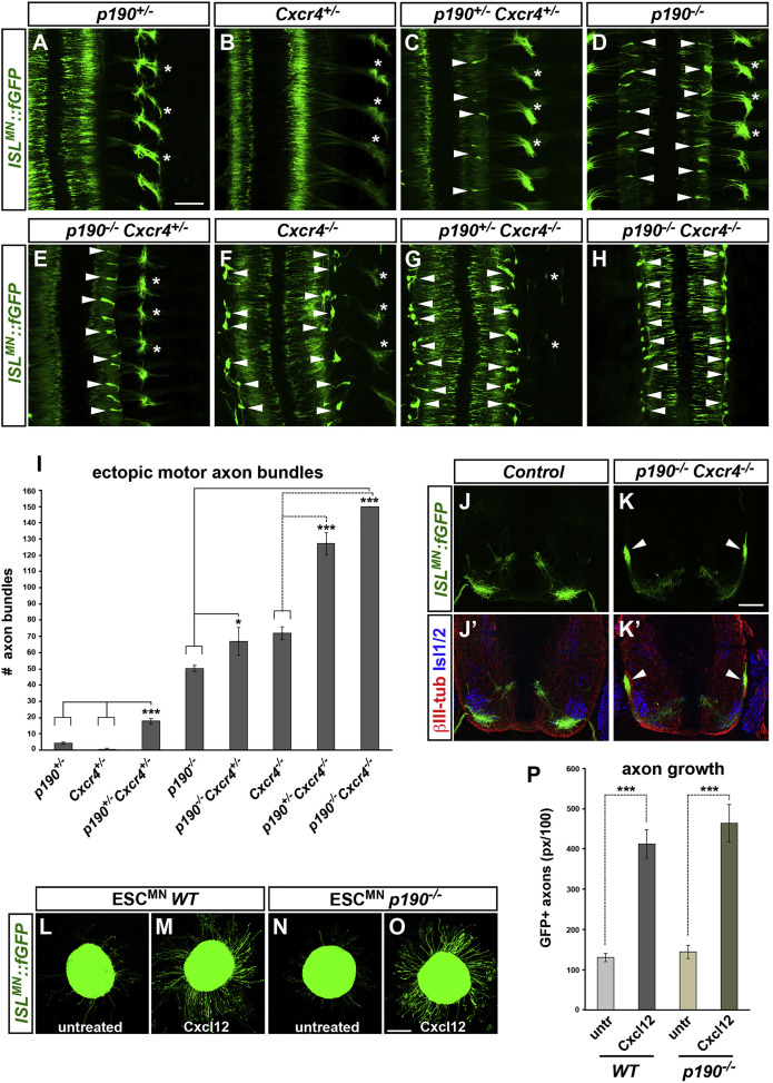 p190RhoGAP Filters Competing Signals to Resolve Axon