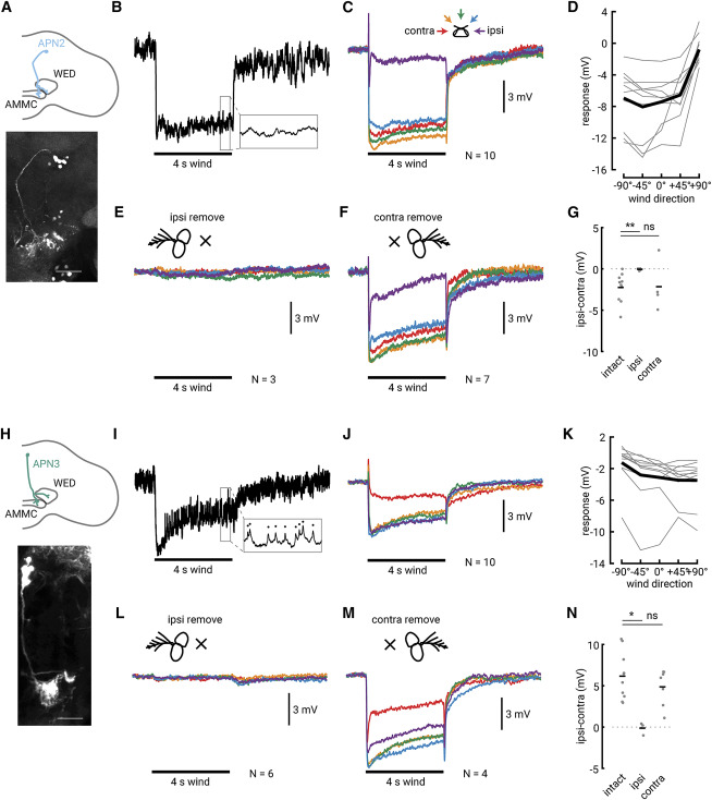 Encoding of Wind Direction by Central Neurons in Drosophila ... on