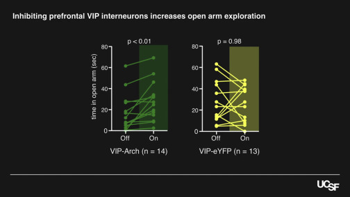 VIP Interneurons Contribute to Avoidance Behavior by