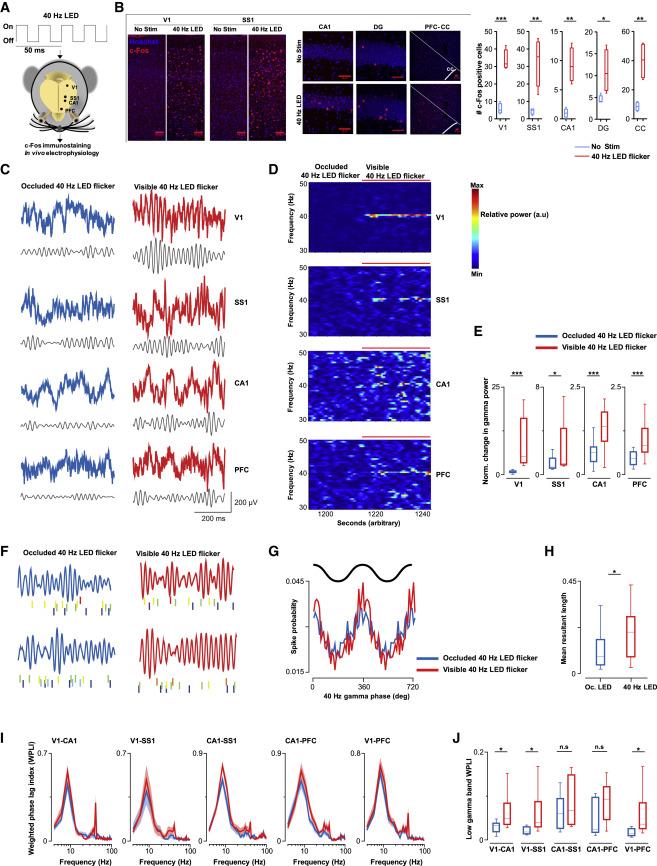 Gamma Entrainment Binds Higher-Order Brain Regions and
