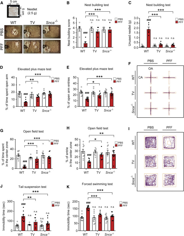 Transneuronal Propagation of Pathologic α-Synuclein from the