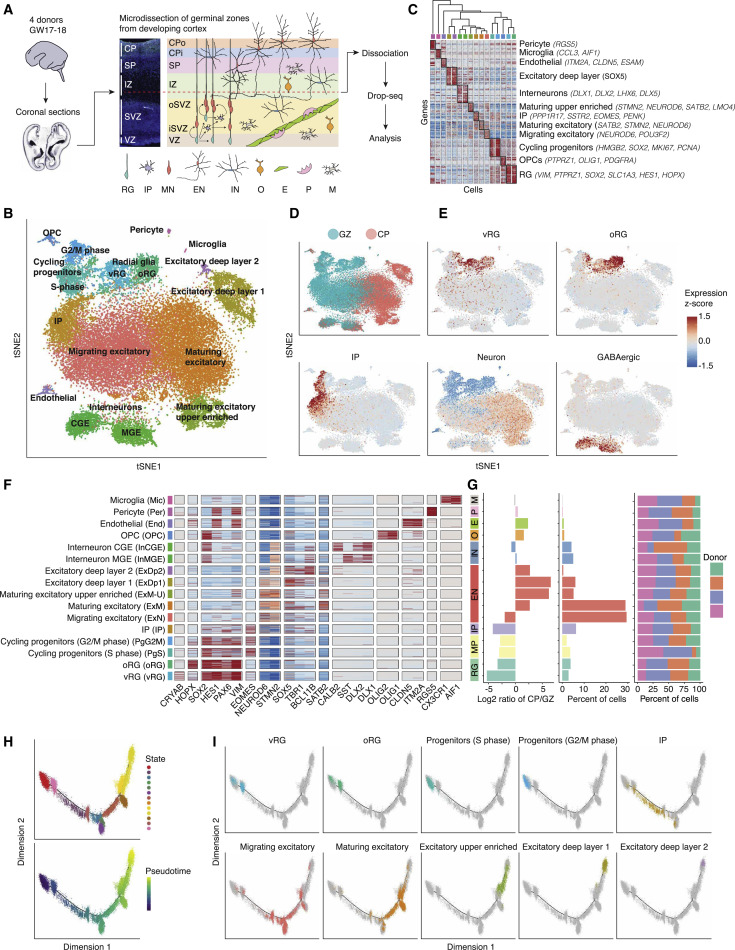 A Single-Cell Transcriptomic Atlas of Human Neocortical Development