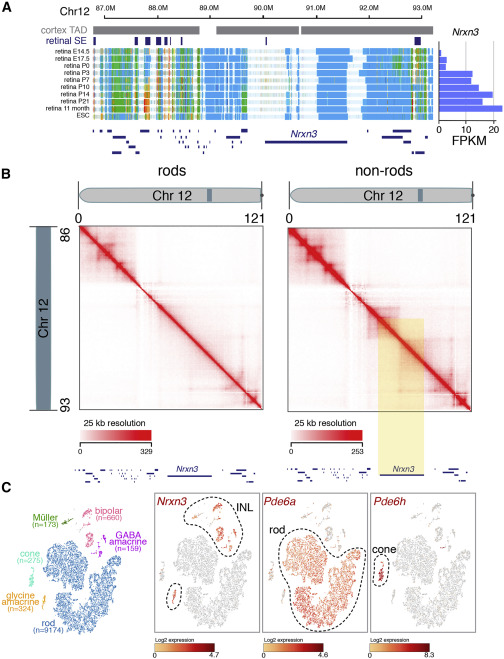 Nucleome Dynamics during Retinal Development - ScienceDirect on