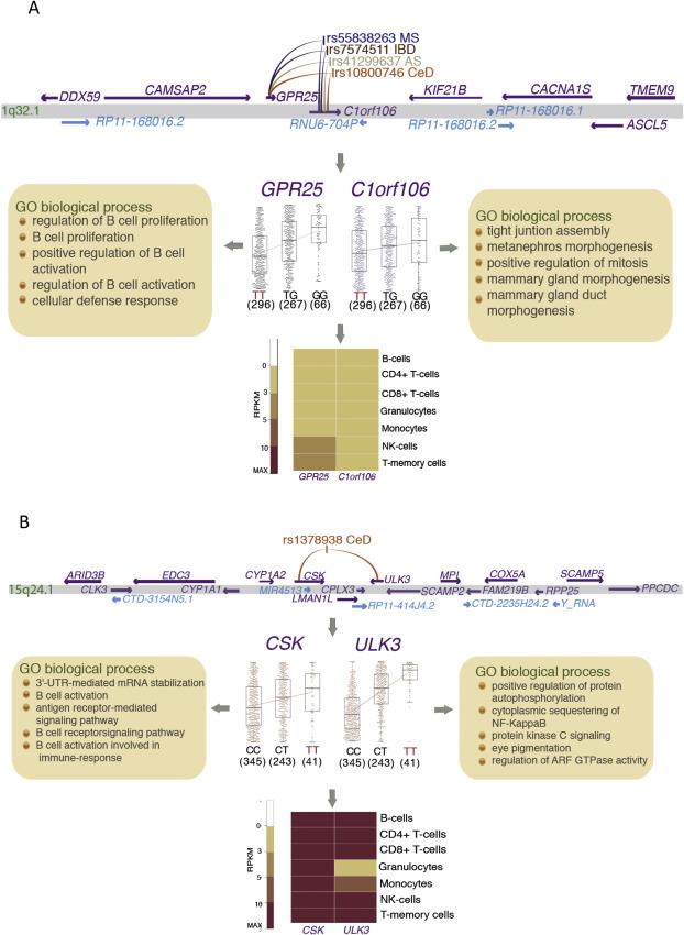 Refined mapping of autoimmune disease associated genetic