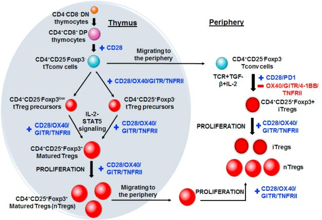 A comprehensive review on the role of co-signaling receptors and