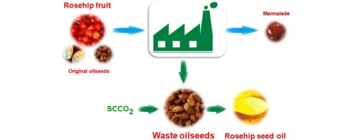 Oil recovery in rosehip seeds from food plant waste products