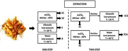 Composition And Antimalarial Activity Of Extracts Of Curcuma Longa L Obtained By A Combination Of Extraction Processes Using Supercritical Co2 Ethanol And Water As Solvents Sciencedirect