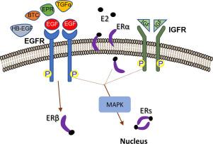 Advances in targeting epidermal growth factor receptor signaling