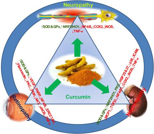 Curcumin: A pleiotropic phytonutrient in diabetic complications