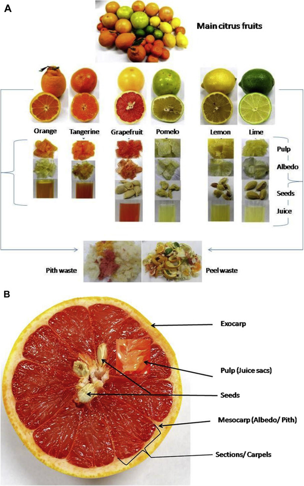 Converting citrus wastes into value-added products: Economic and ...