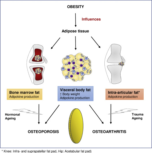 10++ How does osteoporosis affect homeostasis viral