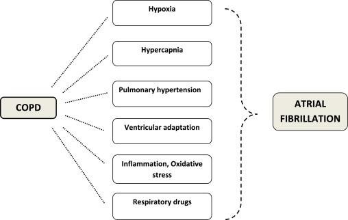 Chronic obstructive pulmonary disease and atrial fibrillation: An
