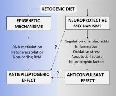 epigenetic effects of ketogenic diet
