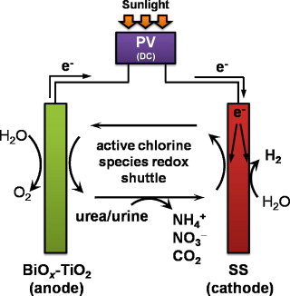 Electrolysis of urea and urine for solar hydrogen