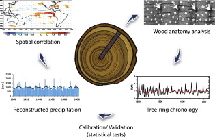 Tree ring dating definition relationship