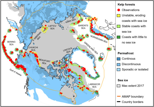 Arctic kelp forests: Diversity, resilience and future - ScienceDirect