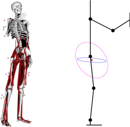 whole body imitation of human