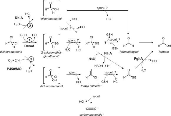 dichloromethane degrading bacteria in the genomic age sciencedirect