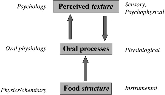 From food structure to texture - ScienceDirect