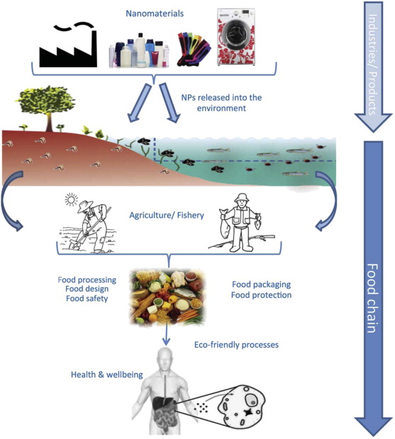 consumer exposure to nps through consumption of nano food additional dietary exposure may result from nps released in the environment that enter the food
