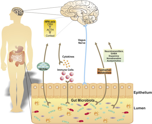 Microbiome In Brain Function And Mental Health Sciencedirect