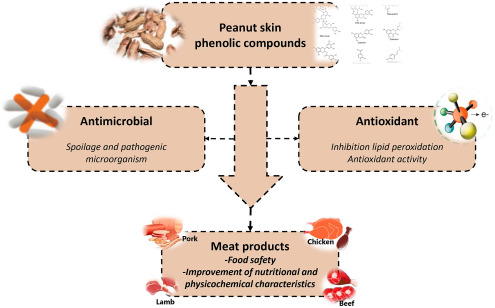 Main characteristics of peanut skin and its role for the