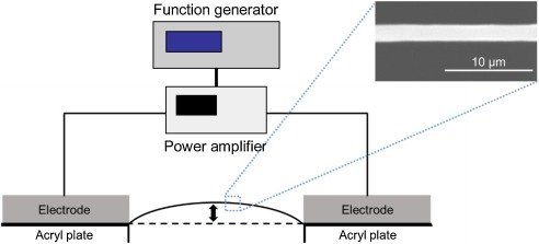 Effect of electrothermal heat on driving of polymer