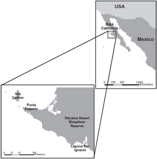 Key species and impact of fishery through food web analysis a 1 map of the study area located along the coast of the vizcaino desert biosphere reserve in the north pacific region of baja california sur mexico sciox Gallery