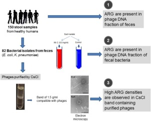 Antibiotic resistance genes in phage particles isolated from