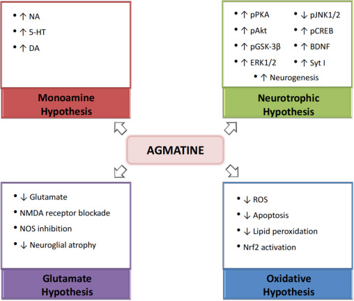 Agmatine, a potential novel therapeutic strategy for