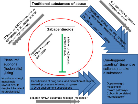 How addictive are gabapentin and pregabalin? A systematic review