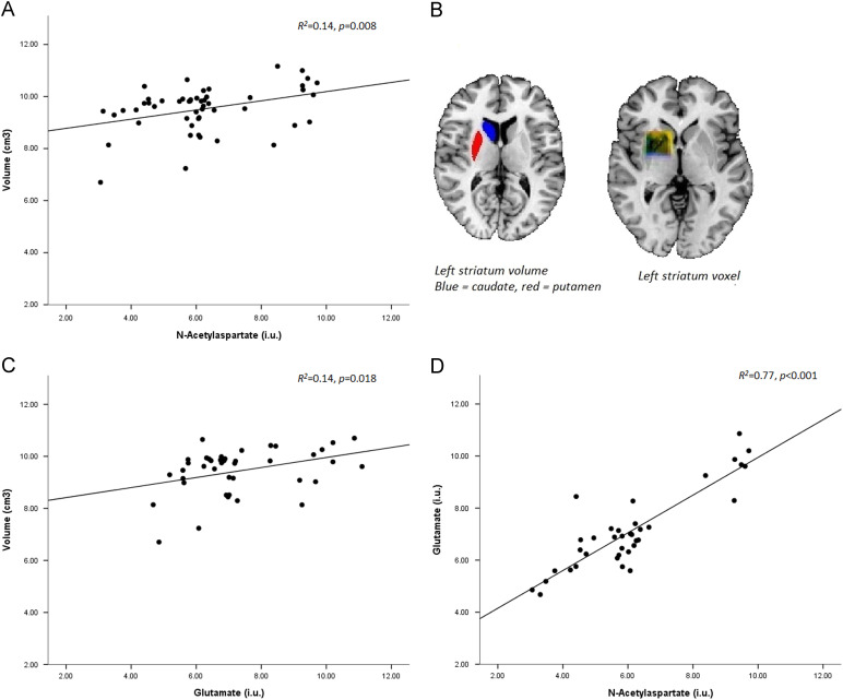 Striatal Structure And Its Association With N Acetylaspartate And