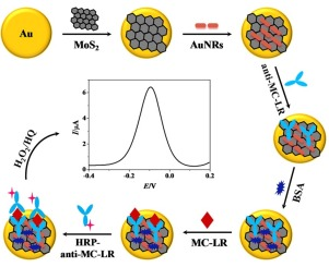 A molybdenum disulfide/gold nanorod composite-based electrochemical