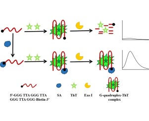 A rapid biosensor for highly sensitive protein detection