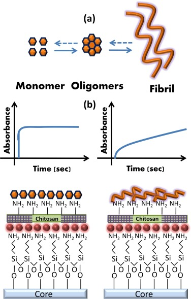 Detection and differentiation of α-Synuclein monomer and fibril by ...