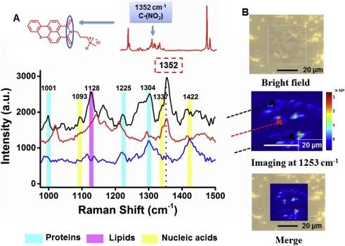 Label-free Raman spectroscopy monitoring of cytotoxic