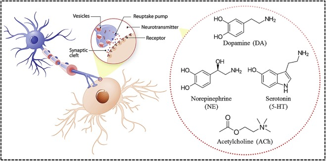 Electrochemical sensing based on carbon nanoparticles: A ... on