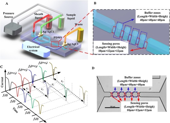 Microfluidic multiple cross-correlated Coulter counter for