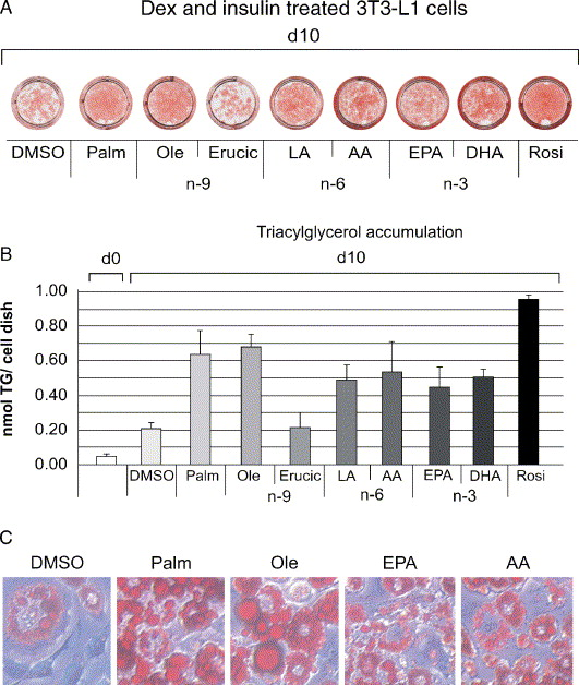 Regulation of adipocyte differentiation and function by
