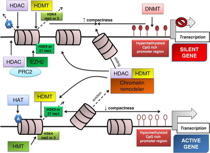 Epigenetic Modifications In Colorectal Cancer Molecular Insights And Therapeutic Challenges Sciencedirect