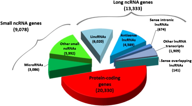 Inherited Variations In Noncoding >> Genetic Variation In The Non Coding Genome Involvement Of Micro