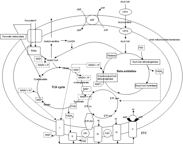 From Genome To Phenomesimple Inborn Errors Of Metabolism As Complex