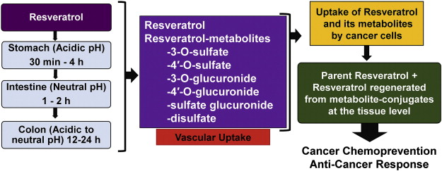 Resveratrol And Cancer Challenges For Clinical Translation Sciencedirect
