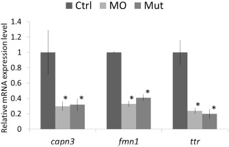 Pathogenesis of POLR1C-dependent Type 3 Treacher Collins