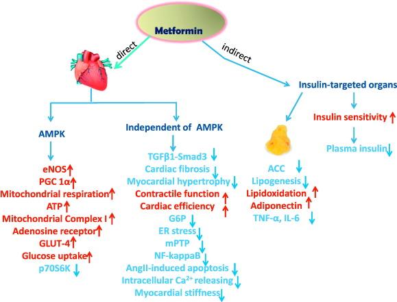 Insulin use with metformin vardenafil zhewitra