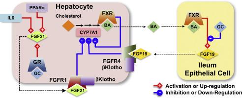 asociación de diabetes fgf15