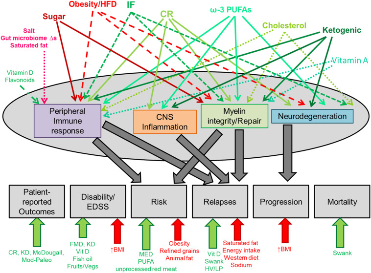 Dietary Influence On Central Nervous System Myelin Production
